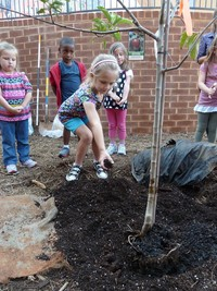 EXCEL student laying dirt down to help cover up a newly planted tree