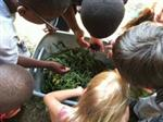 students getting worms for the compost pile